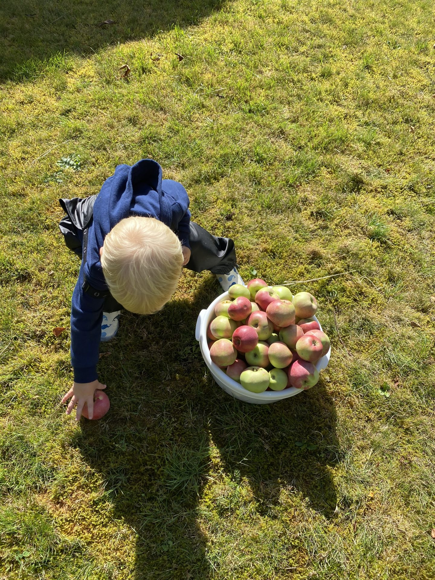 Friske æbler fra haven